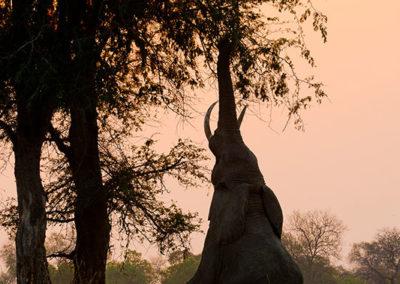 Lion Camp by Mantis - Safari