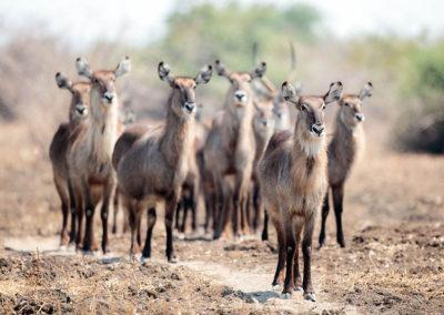 140925_1023_10-2-Safari Experience