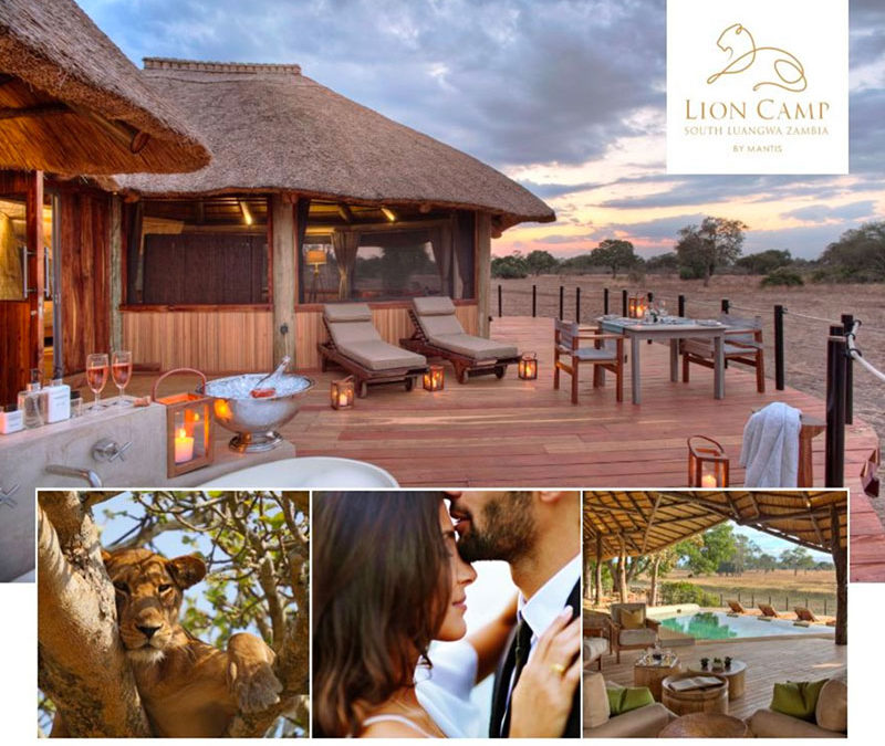 Lion Camp Honeymoon Offer